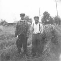 Niilo Takala ja Paavo Vanhahonko ruispellolla