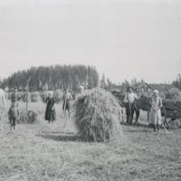 Heinätöitä Ylöstalon pellolla Virenojalla 1930-luvulla
