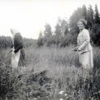 Peltotyötä Umpimaan tilalla 1950-luvulla