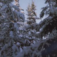 Jalasjärven joulu 1984