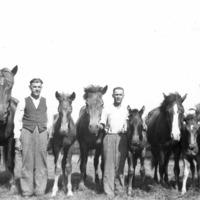 Miehet esittelemässä hevosia ja varsoja