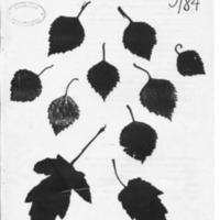 kuulumiset1984-3.pdf