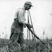 Agronomi Lauri Sihvola viljankorjuussa
