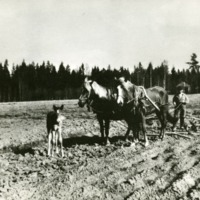 Janne Mäkinen peltotöissä 1920-luvulla