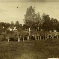 Karjanäyttely 1900-luvun alussa