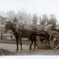 hevoskärry2.jpg
